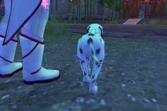 Cachorrinho-Malhado-WesleyHP-4