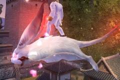 Esquilo Voador - WesleyHP (3)