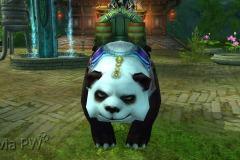 Filhote-de-Panda-Pequeno-Mau-WesleyHP-2