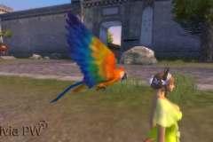 Papagaio-Pet-Ornamental-1