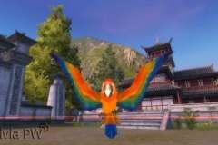 Papagaio-Pet-Ornamental-2