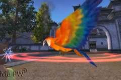 Papagaio-Pet-Ornamental-3
