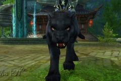 Leopardo-do-Vento-WesleyHP-2