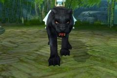 Leopardo-WesleyHP-2