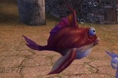 Peixe-bolha-Bebê-WesleyHP-1