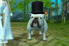 Sr.-Bulldog-WesleyHP-2