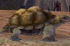 Tartaruga-Inspirada-WesleyHP-1
