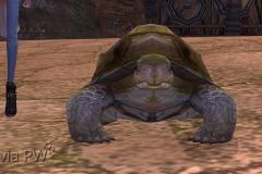 Tartaruga-Inspirada-WesleyHP-2