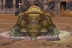Tartaruga-Inspirada-WesleyHP-4