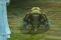 Tartaruga-WesleyHP-4