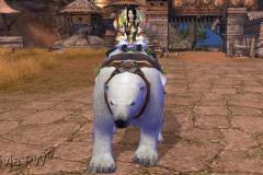 Urso-Polar-WesleyHP-2